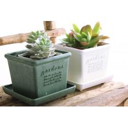 Eco-Friendly Square Pot...